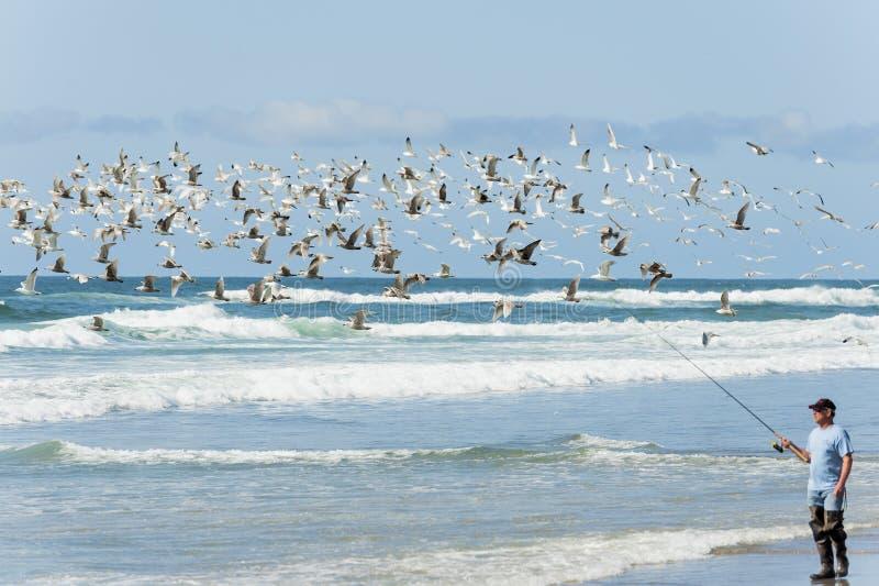 Seagulls flyger ovanför ett manbränningfiske i Stillahavs- stad royaltyfria bilder