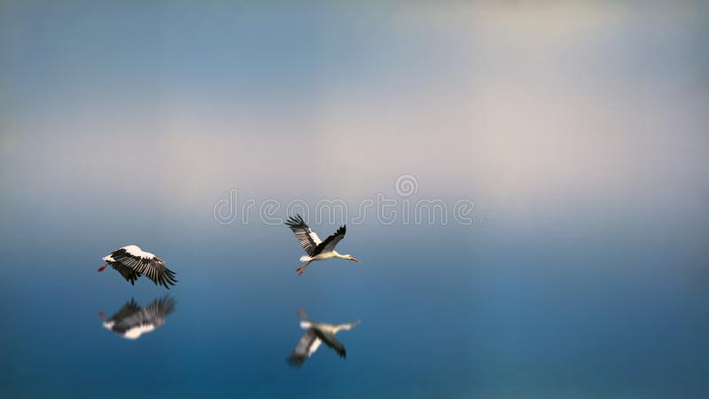Seagulls Flying Above Body Of Water royalty free stock images
