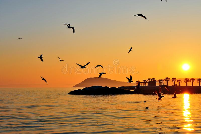 Seagulls flying above the sea on sunset stock photo