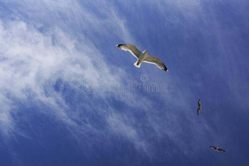 Seagulls Flying Against Blue Sky With Cirrus Clouds Free Public Domain Cc0 Image