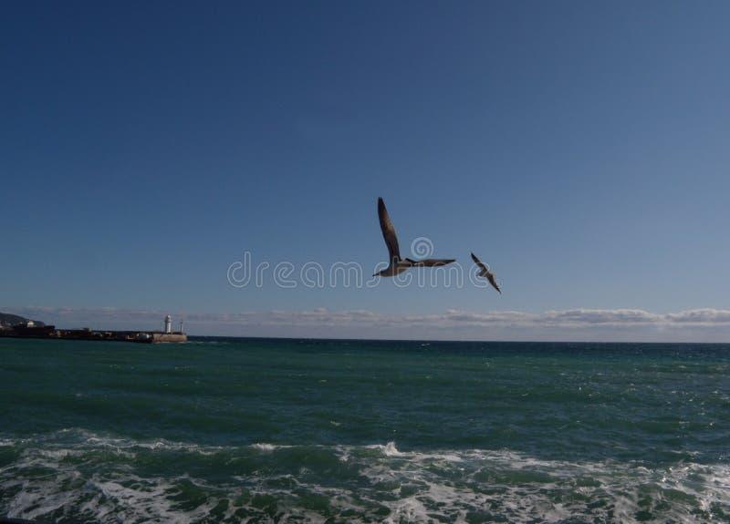 Seagulls flying in blue sky. Beauty, coast, neste, cute, white, soar, independence, big, bird, eye, wild, natural, looking, animal, seabird, beak, wildlife royalty free stock photo