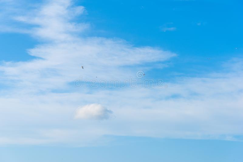 Seagulls flying in a bue sky royalty free stock photography