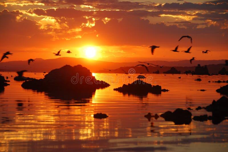 Seagulls flying over Mono Lake during sunrise