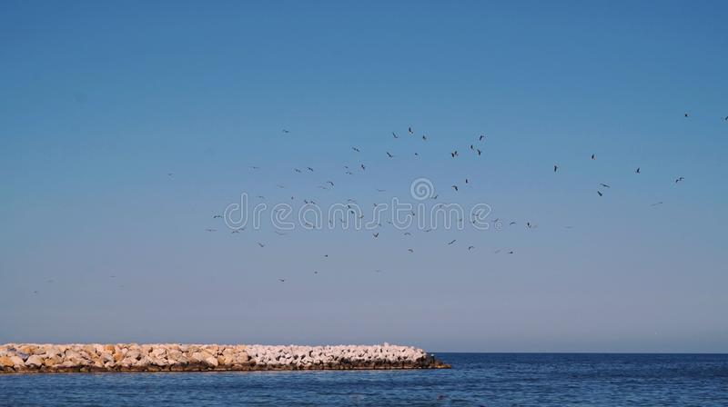 seagulls flying over the sea royalty free stock image