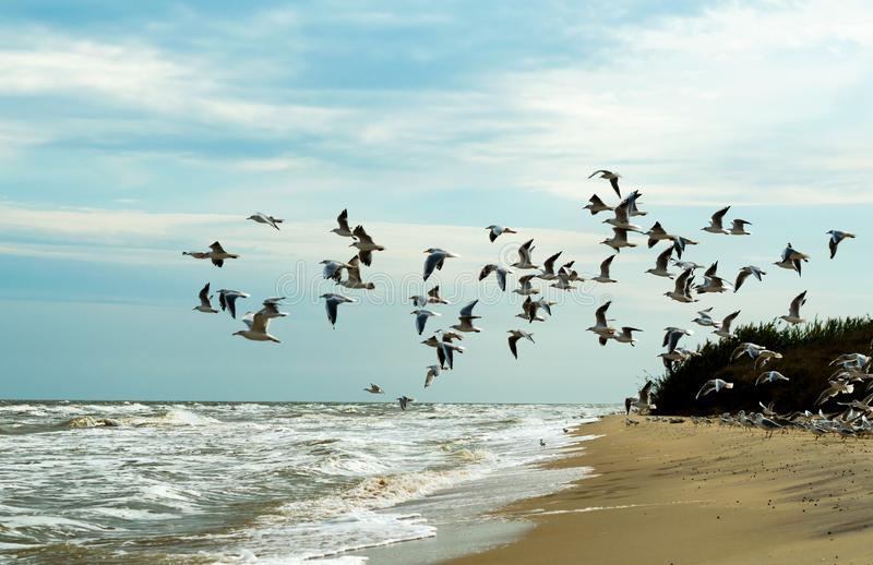 Seagulls are flying over the sea royalty free stock photo