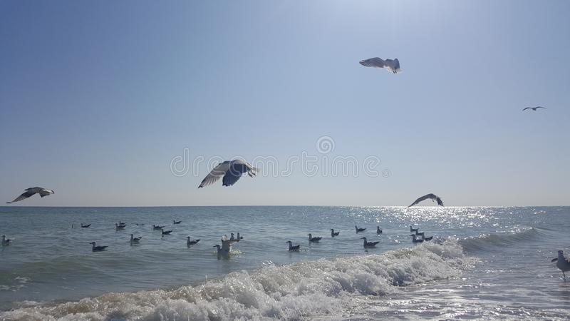Seagulls flying over the sea in a summer day with blue sky royalty free stock images