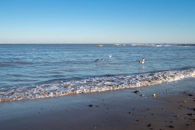 Seagulls flying over the water on the coast of Kent. Waves on the shore in the evening sun in Kent, with seagulls flying over the water royalty free stock photography