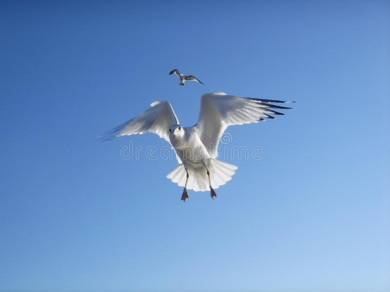 Seagulls Flying in the Sky on Brighton Beach. royalty free stock photo