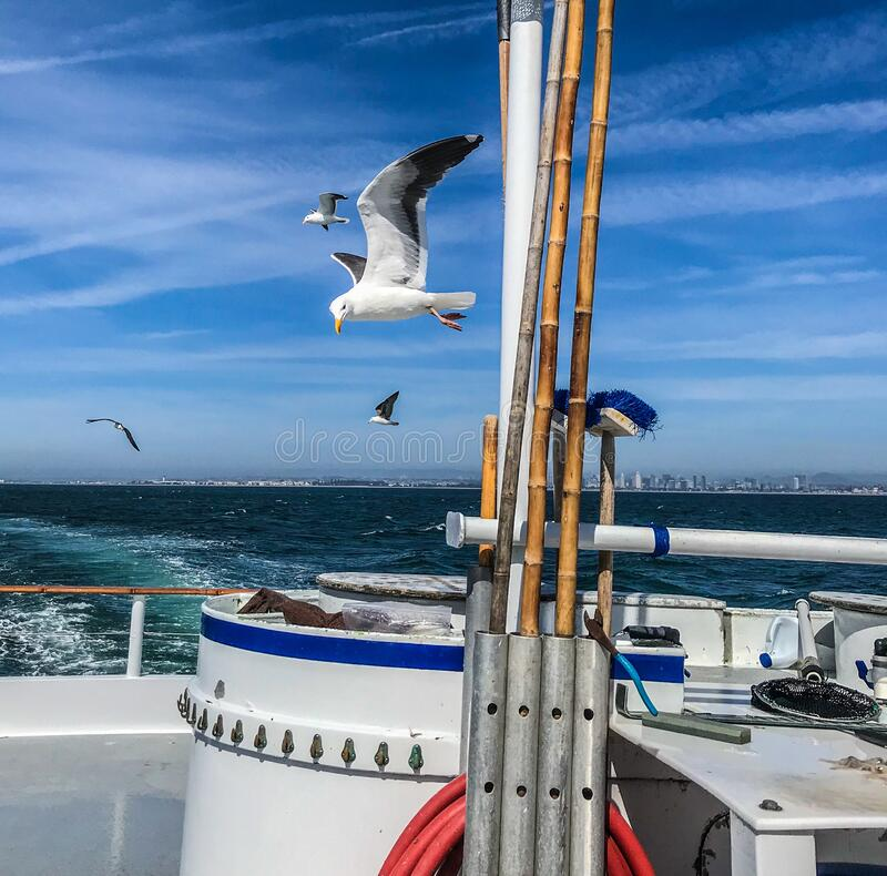 Fishing boat. Seagulls following a fishing boat under a blu sky royalty free stock image