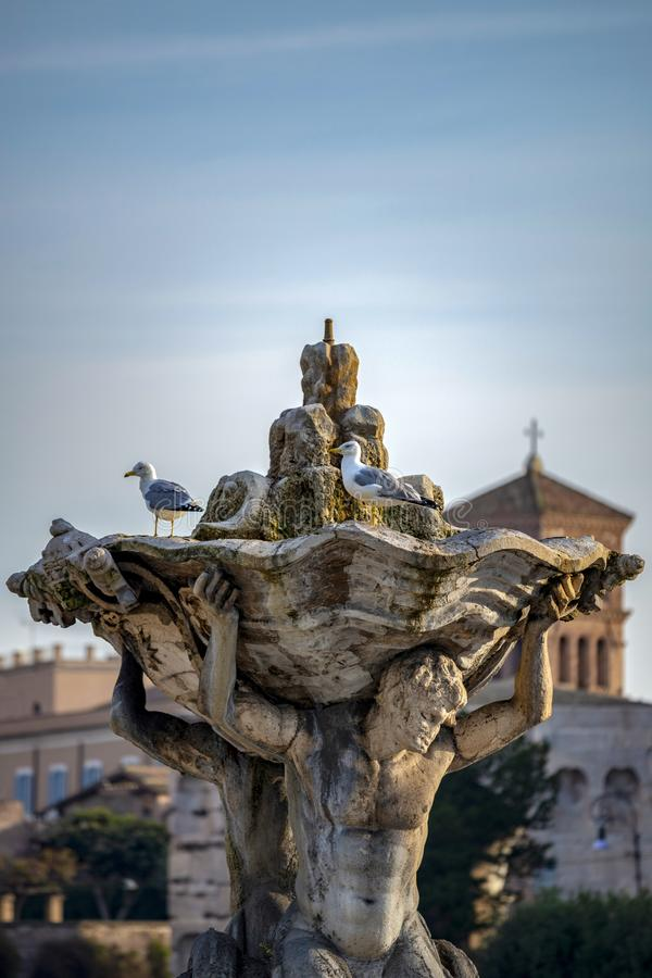 Seagulls on the fountain royalty free stock photos