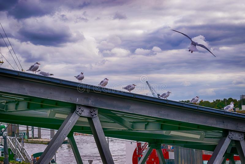 Seagulls i Hamburg - Tyskland royaltyfria bilder
