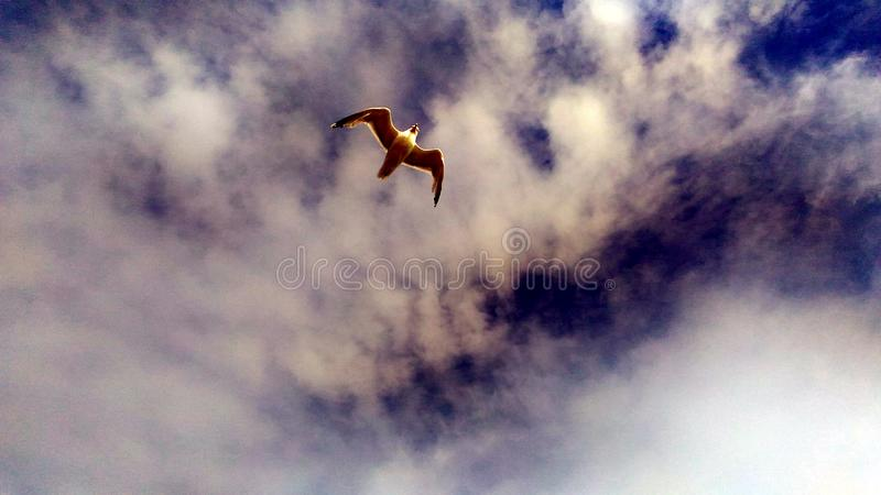 Seagulls i himlen! royaltyfria bilder