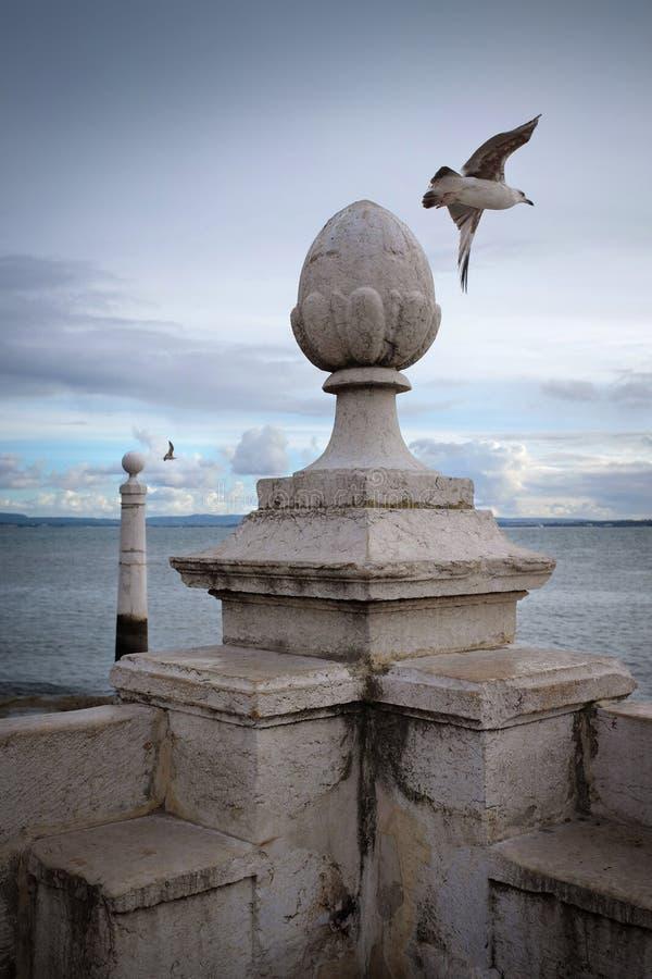 Seagulls i kolonnskeppsdocka royaltyfria foton