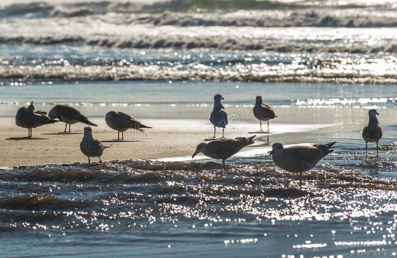 Seagulls i Porto arkivbild