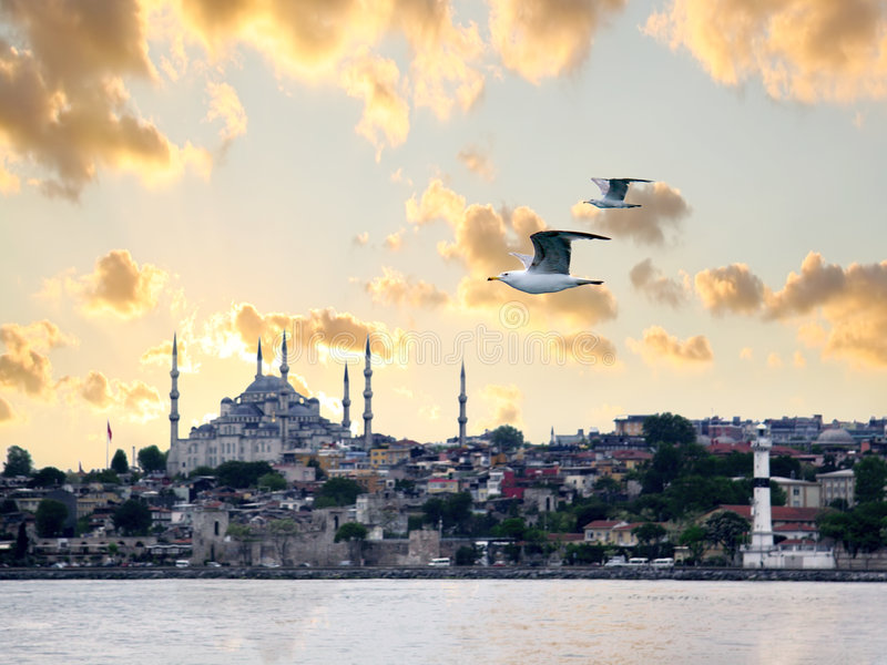 Download Seagulls on Istanbul stock image. Image of orient, architecture - 5867229
