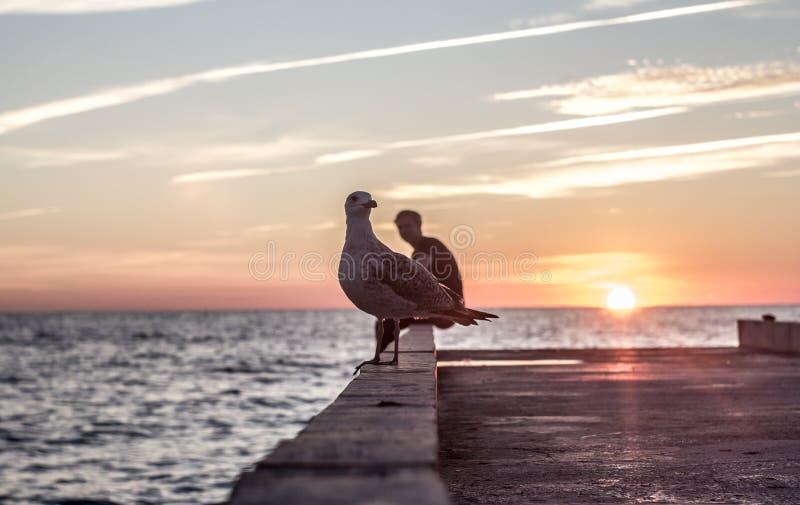 Seagulls jako dzwoni karta morze fotografia royalty free