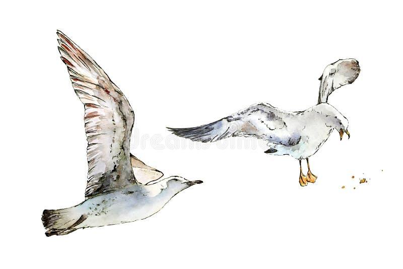 Seagulls lata chleb i caching ilustracja wektor
