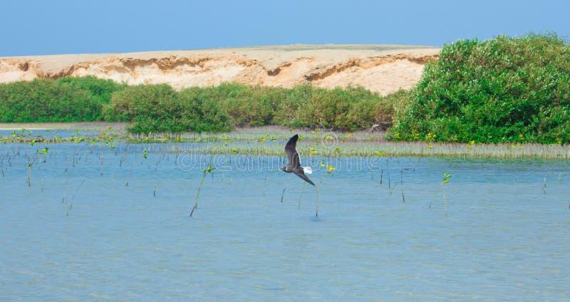 Seagulls lata i Łowi denną stroną z tłem ocean i niebieskie niebo fotografia stock