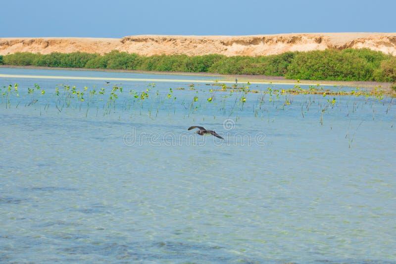 Seagulls lata i Łowi denną stroną z tłem ocean i niebieskie niebo obraz stock