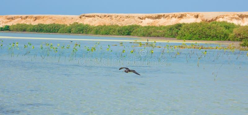 Seagulls lata i Łowi denną stroną z tłem ocean i niebieskie niebo obrazy royalty free