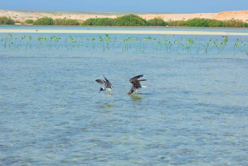 Seagulls lata i Łowi denną stroną z tłem ocean i niebieskie niebo obrazy stock