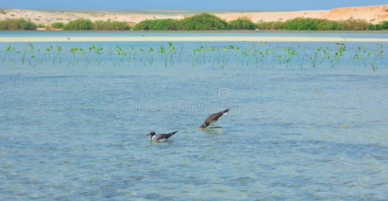 Seagulls lata i Łowi denną stroną z tłem ocean i niebieskie niebo zdjęcie royalty free