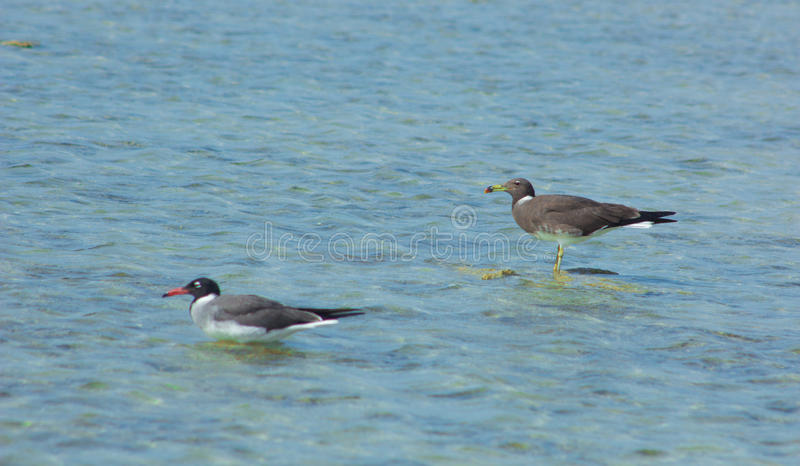 Seagulls lata i Łowi denną stroną z tłem ocean i niebieskie niebo zdjęcia royalty free