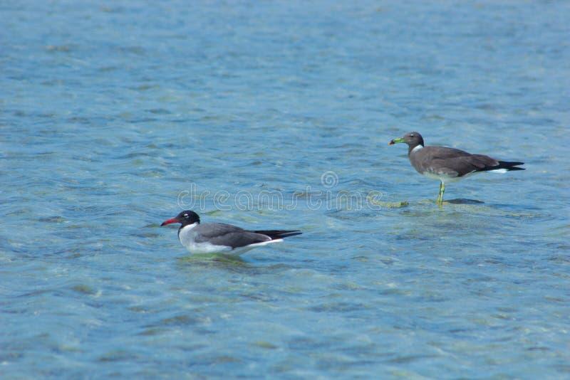 Seagulls lata i Łowi denną stroną z tłem ocean i niebieskie niebo zdjęcie stock