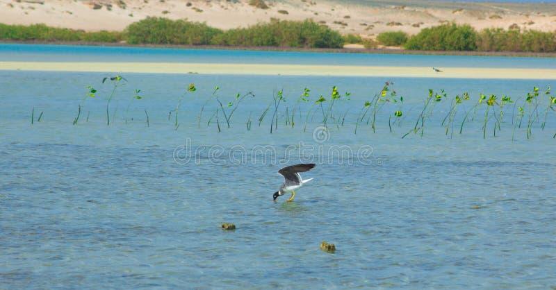 Seagulls lata i Łowi denną stroną z tłem ocean i niebieskie niebo obraz royalty free
