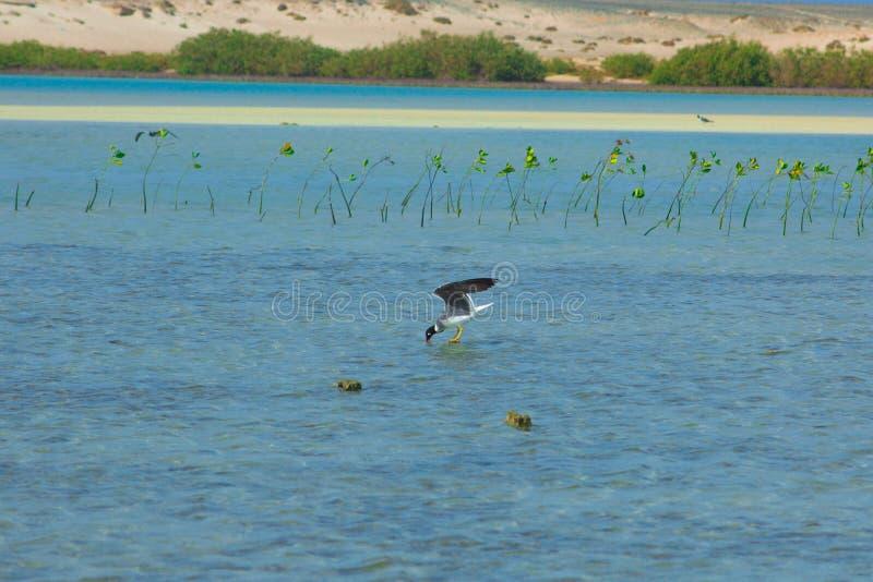 Seagulls lata i Łowi denną stroną z tłem ocean i niebieskie niebo zdjęcia stock