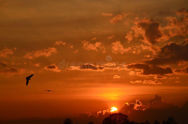 Seagulls lata przeciw zmierzchu niebu obraz stock