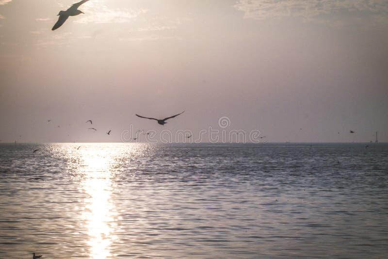Seagulls lata przy zmierzchu nieba waniliowymi trochę białymi chmurami nad dennego peacefulness natury pięknym tłem obraz stock