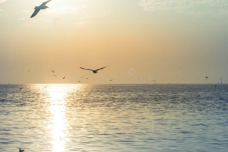 Seagulls lata przy zmierzchu nieba waniliowymi trochę białymi chmurami nad dennego peacefulness natury pięknym tłem fotografia royalty free
