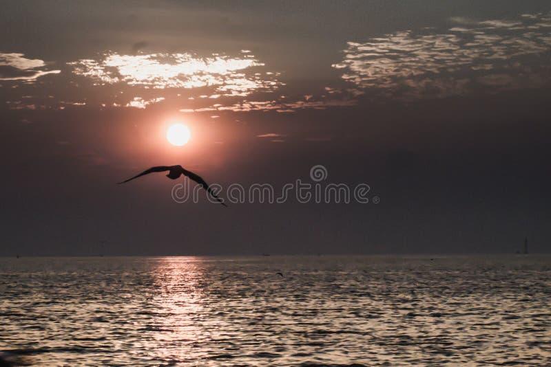 Seagulls lata przy zmierzchu nieba waniliowymi trochę białymi chmurami nad dennego peacefulness natury pięknym tłem zdjęcia royalty free