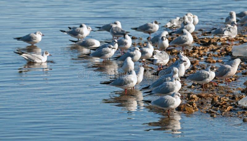 Seagulls na wybrzeżu zdjęcia royalty free