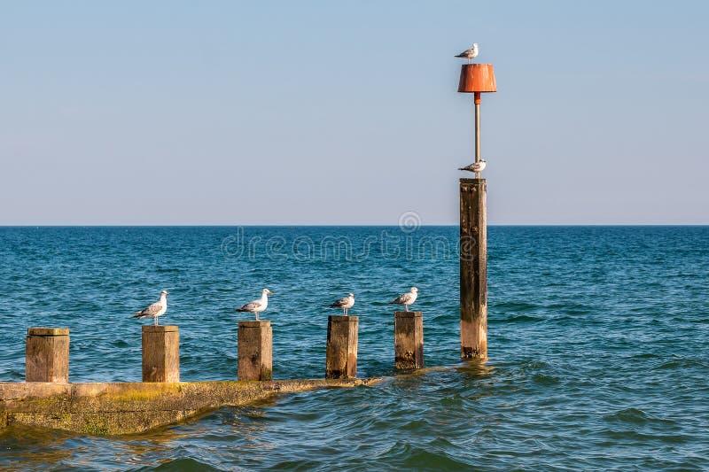Seagulls na falochronie obraz stock