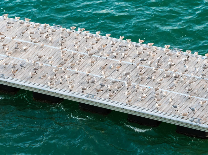 Seagulls na molu fotografia royalty free
