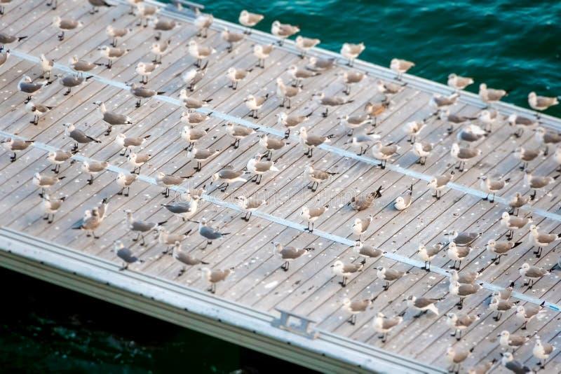 Seagulls na molu zdjęcie stock