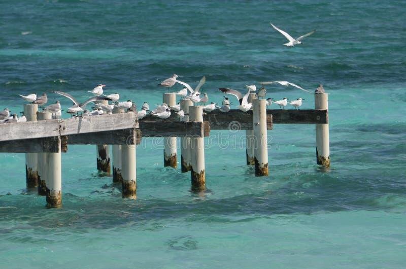 Seagulls na molu obrazy royalty free