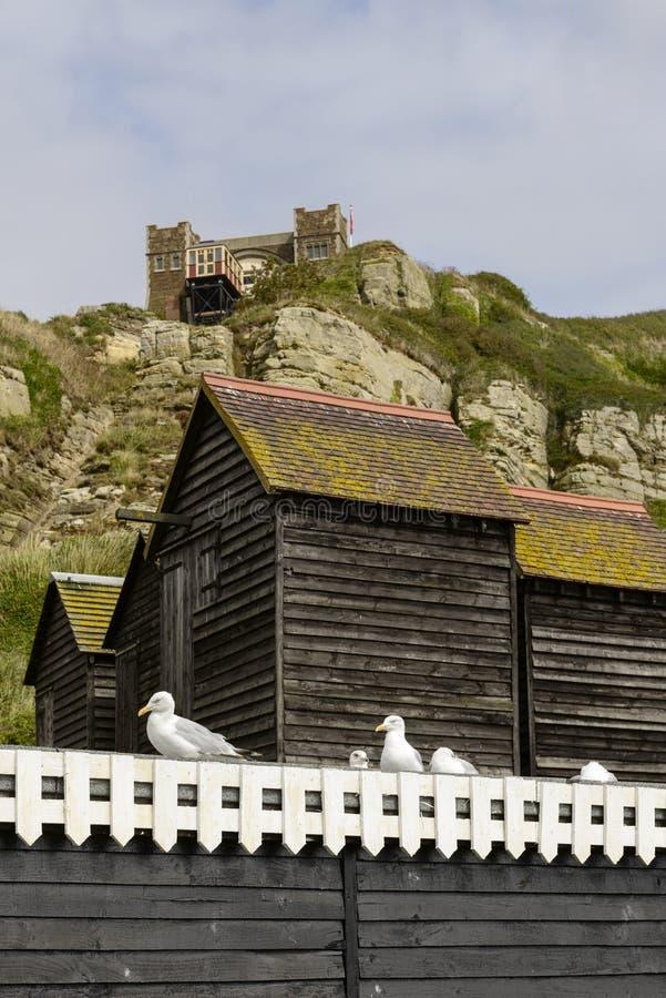 Seagulls, netto budy i falezy, Hastings zdjęcie royalty free