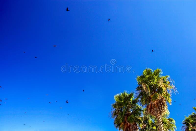 Seagulls och palmträd royaltyfria bilder