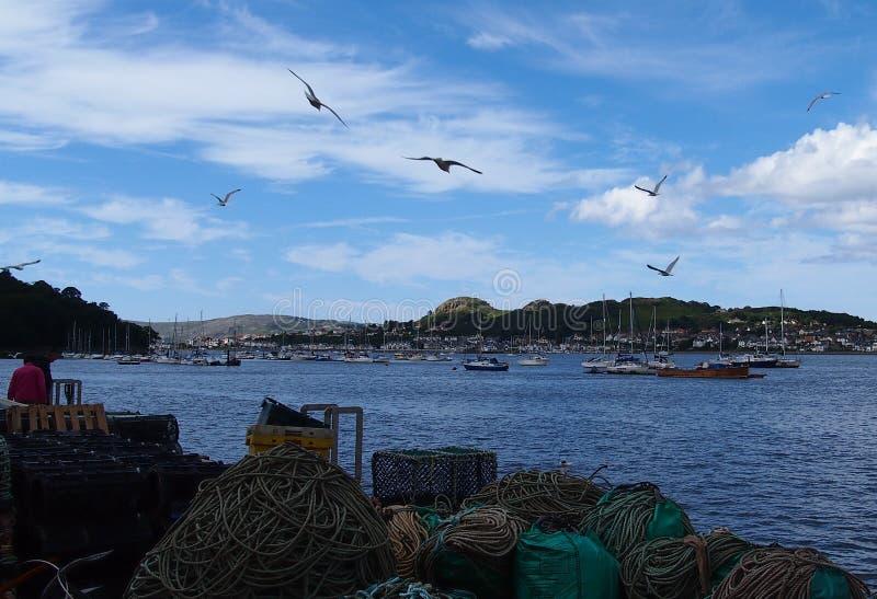 Seagulls okrąża nad Conwy schronieniem, Walia, Wielki Brytania fotografia royalty free