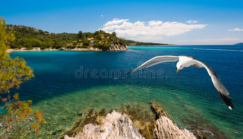 Seagulls Over Sea Shore Royalty Free Stock Image