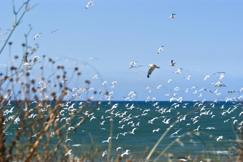 Download Seagulls over sea stock image. Image of nature, peace - 41833281