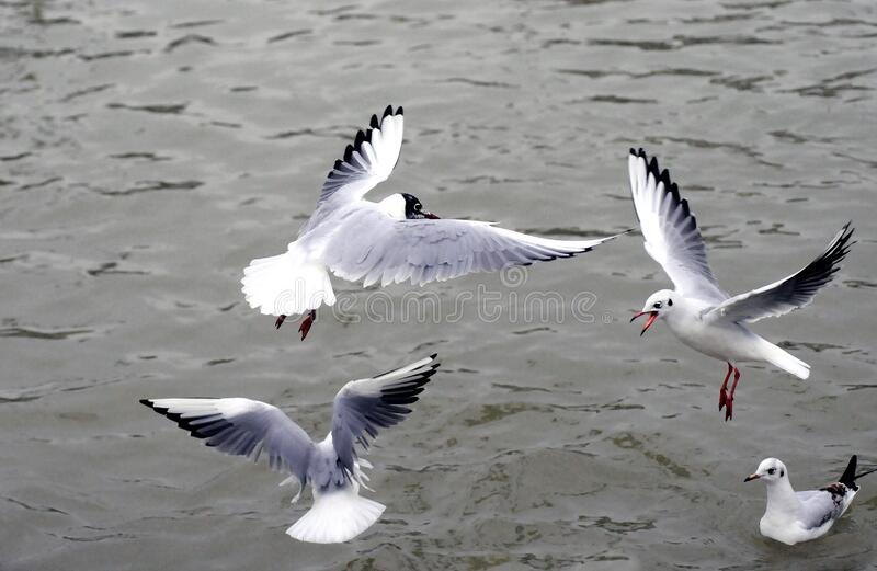 Seagulls Over Water Free Public Domain Cc0 Image