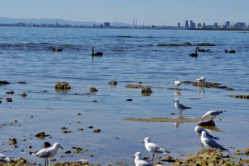 Seagulls på Brighton Beach arkivfoton