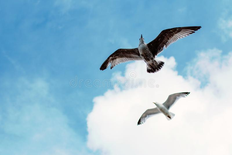 Seagulls på Brighton Beach royaltyfri fotografi