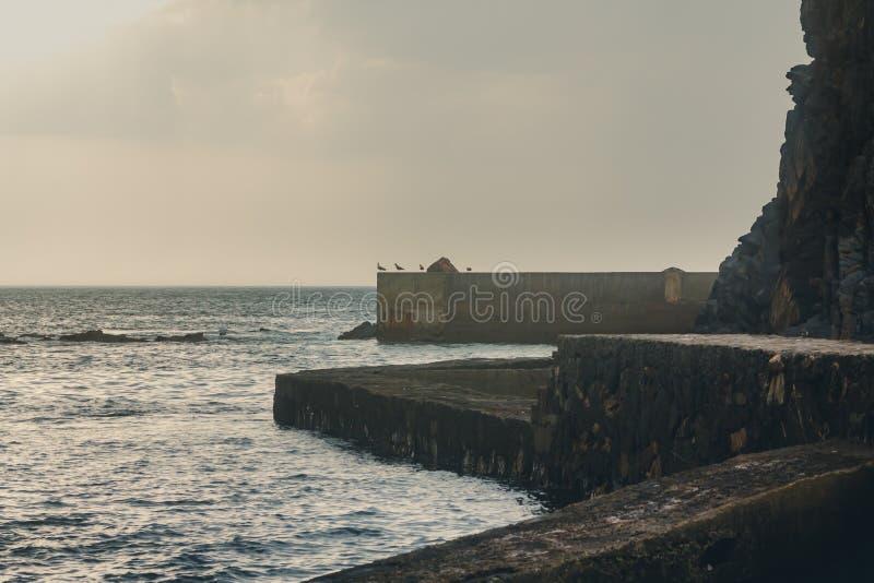 Seagulls p? en betongv?gg i en liten fiska port royaltyfria foton
