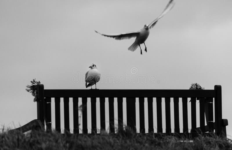 Seagulls på minnes- platser på den Tynemouth tillflyktsorten, Förenade kungariket arkivbilder