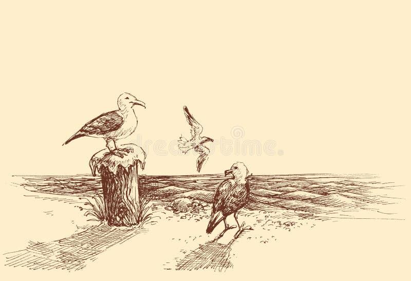 Seagulls på stranden stock illustrationer